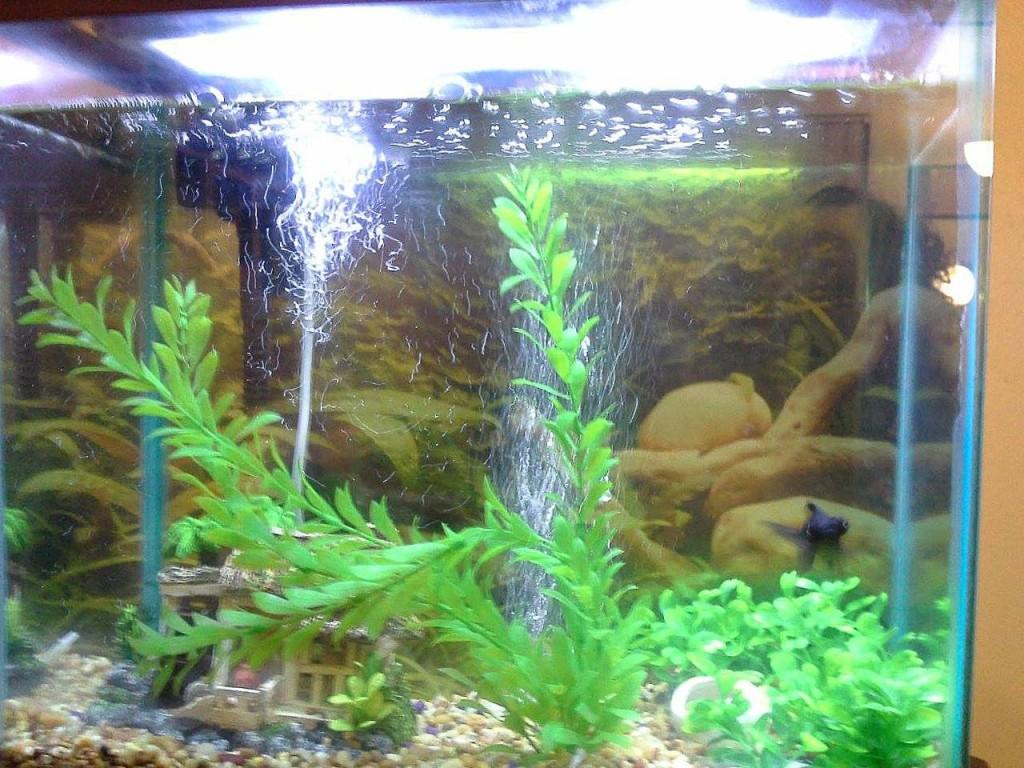 Black Moor Pete happy in his new home