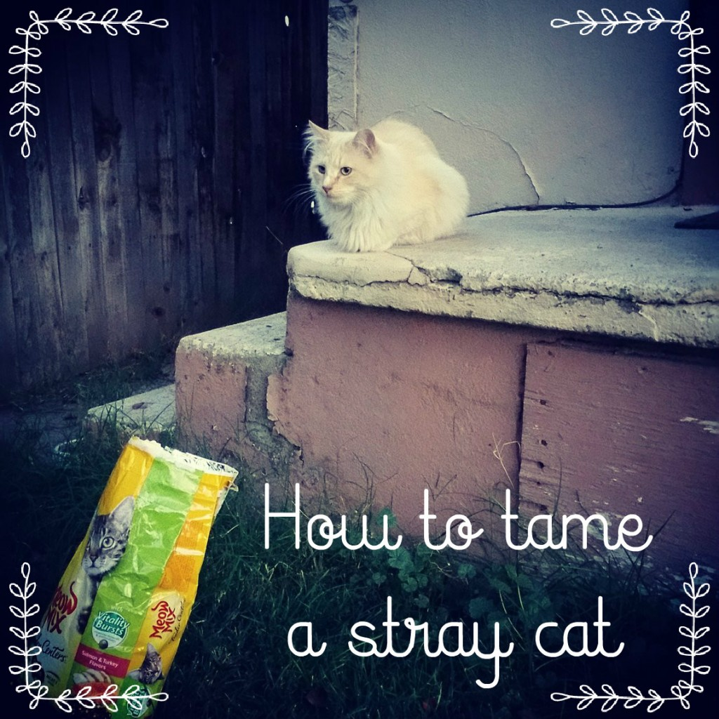 How to tame a stray cat